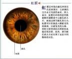 创新通虹膜识别通道管理系统方案解析