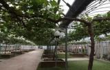 杭州智慧农业使农民实现手机管理田间地头