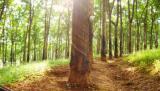 科达视频会议连接万亩橡胶林