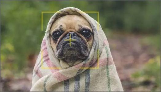 """从""""人脸识别""""到""""狗脸识别"""",人工智能也要去宠物经济分杯羹?"""